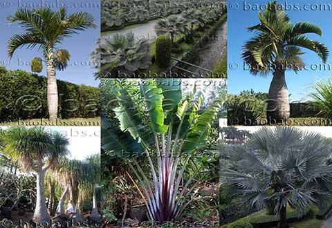 Plantes et graines tropicales exotiques vente par for Plantes par correspondance