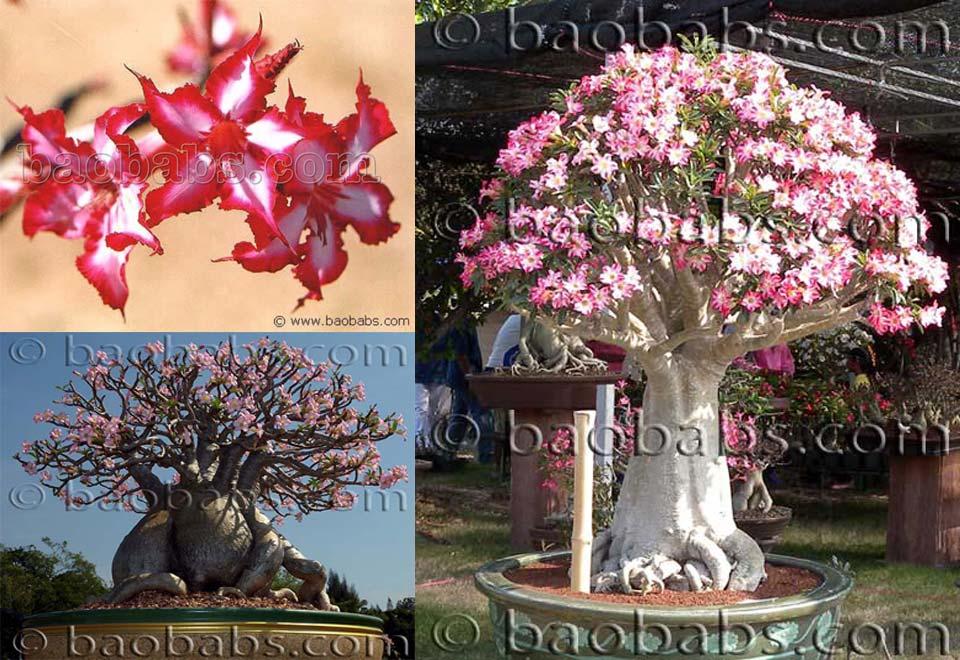 Plantes et graines tropicales exotiques rares for Catalogue plantes par correspondance
